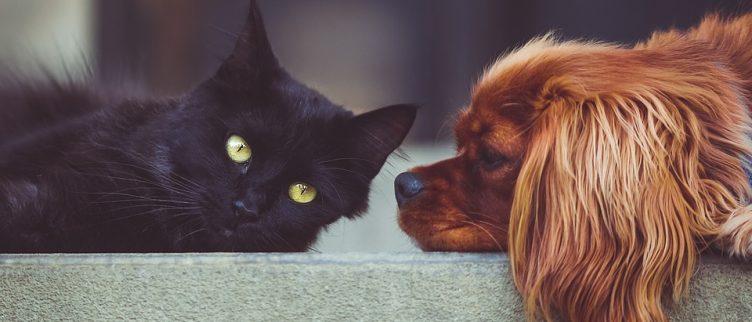 8 tips om te besparen op kosten voor huisdieren