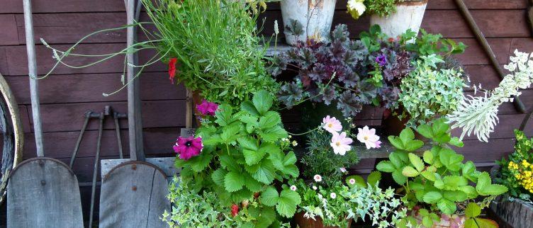 18 Goedkope tips om je tuin op orde te krijgen